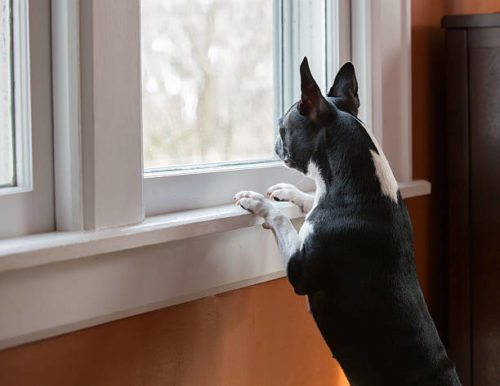 dog double glazing